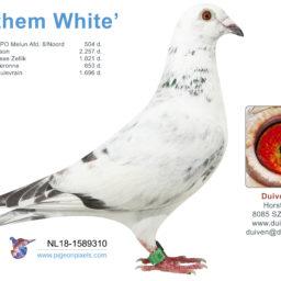 (Nederlands) 18-1589310