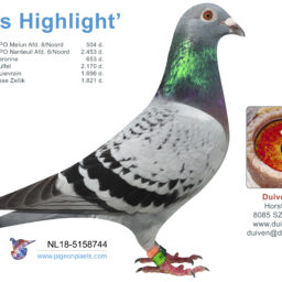 (Nederlands) NL18-5158744